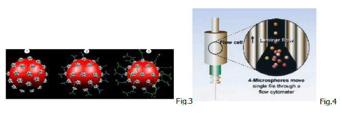 laboratorio-san-giorgio-test-bioplex-2200-malattie-autoimmuni-2
