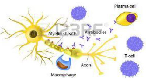 laboratorio-san-giorgio-test-bioplex-2200-malattie-autoimmuni-4